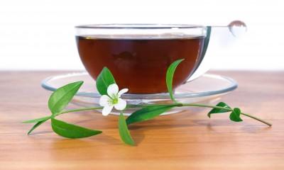 herbata a antyoksydanty