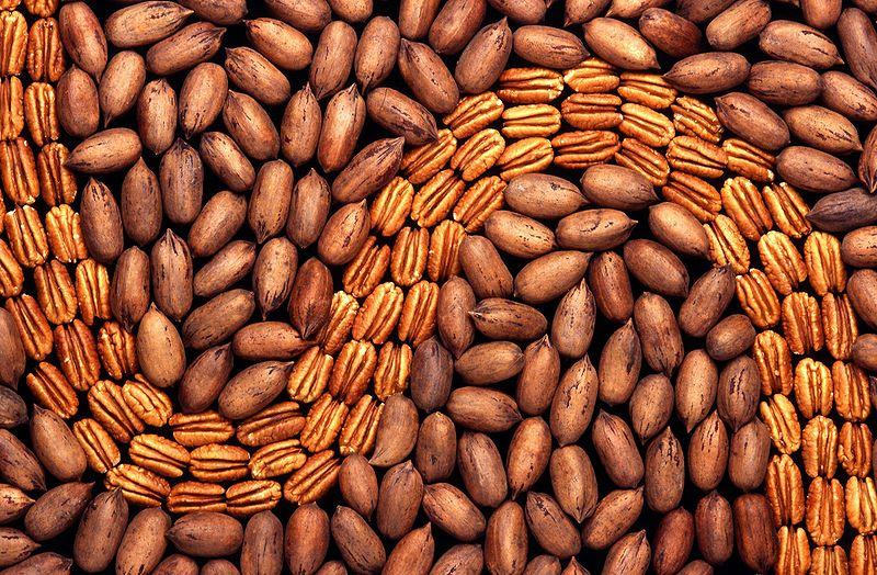 Pekan – orzechy pekanowe pełne zdrowia