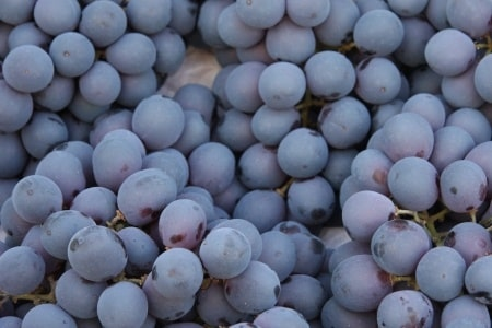 Winogrona – właściwości