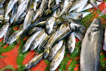 Spożycie ryb w ciąży – zagrożenie metylortęcią