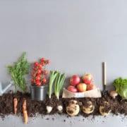żywność organiczna