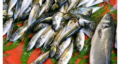 tydzien rybny