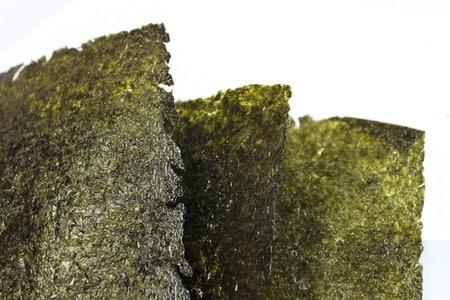 Algi – cud natury