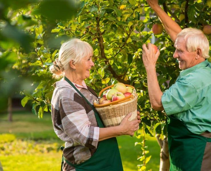 przeciwutleniacze starzenie się