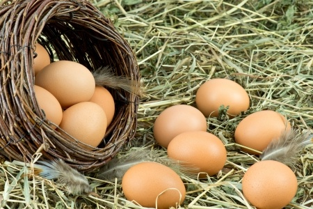 Jajka – właściwości