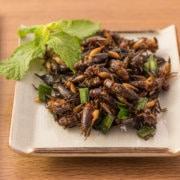 owady na talerzu