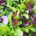 Jak wybierać warzywa liściaste w supermarkecie?