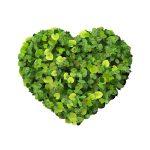 Sterole roślinne a cholesterol