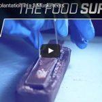 Chirurgia produktów spożywczych