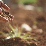 Jedzenie ziemi – geofagia: czy nowy trend?