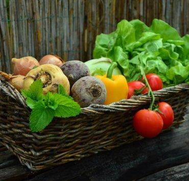dieta roślinna