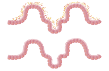 prebiotyki probiotyki