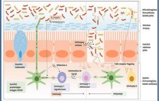 system autoimmunologiczny