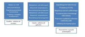 rekomendacje probiotyków