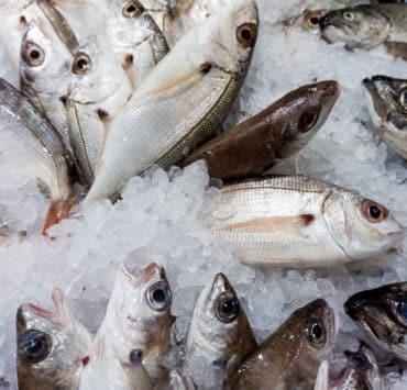 jak rozpoznać świeżą rybę
