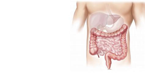 Oś jelitowo-wątrobowa punktem uchwytu dla probiotyków