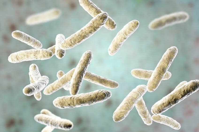mikrobiom