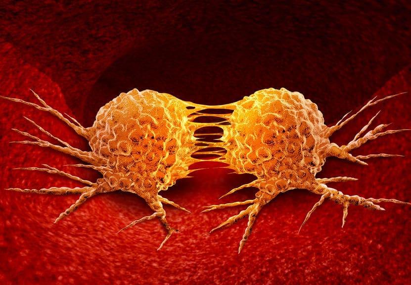 dzielące się komórki