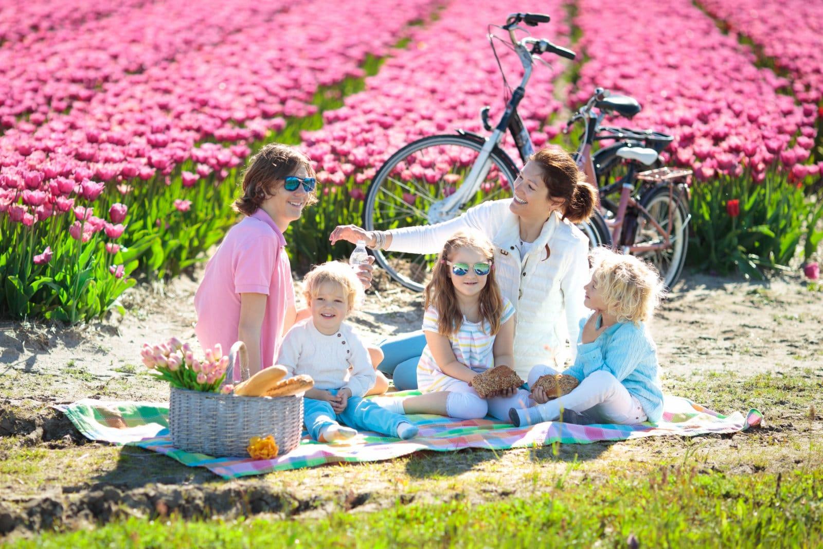 piknik natura