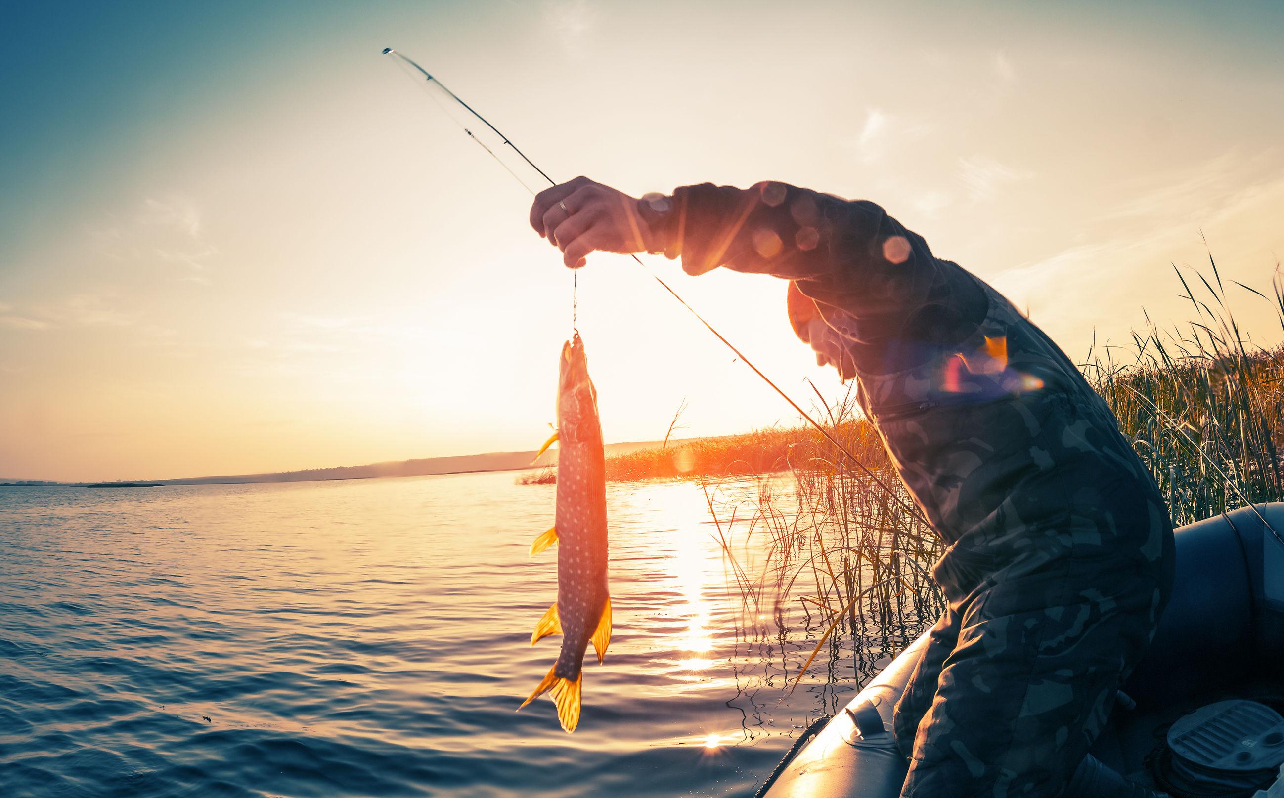 najdrowsze ryby polskich jezior