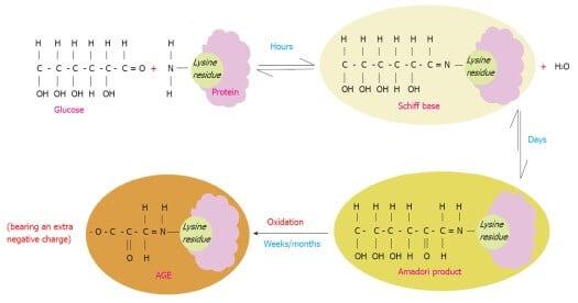 końcowe produkty glikacji schemat