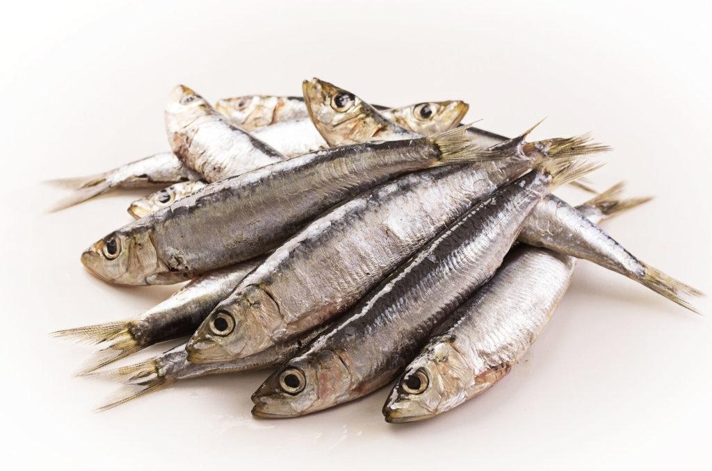 anchois świeże