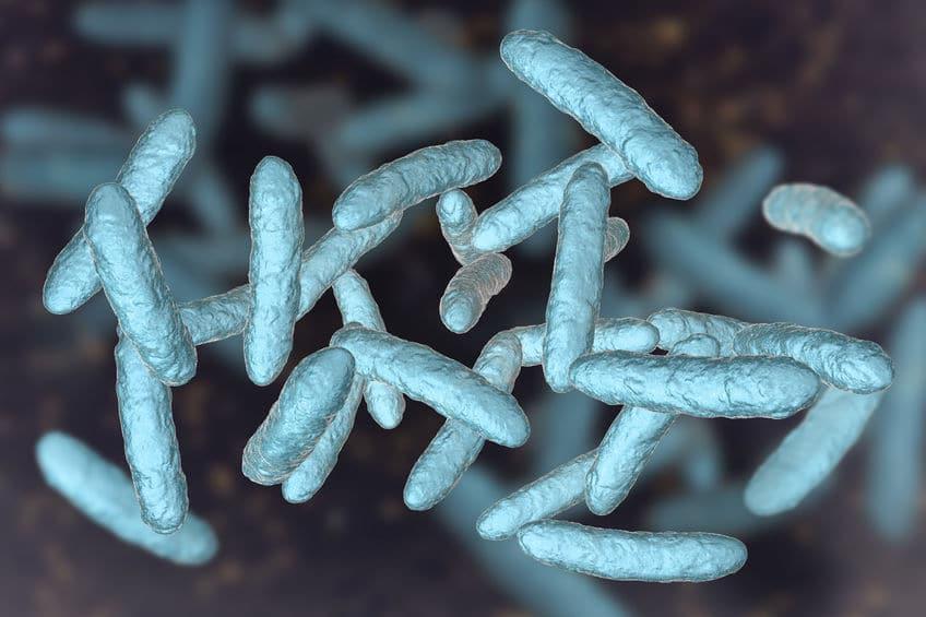 mikrobiom stan zapalny