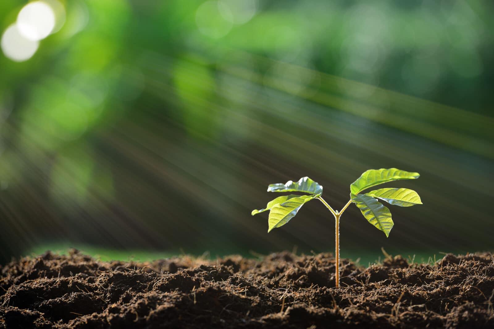 dzikie rośliny jadalne
