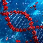 otyłość geny