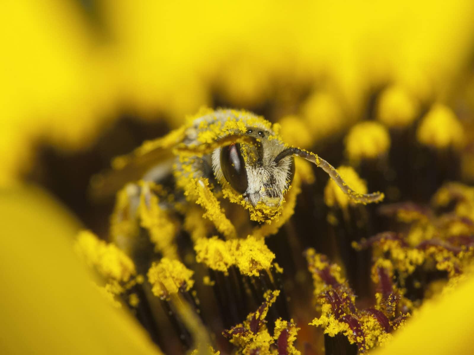 pierzga i pyłek pszczeli