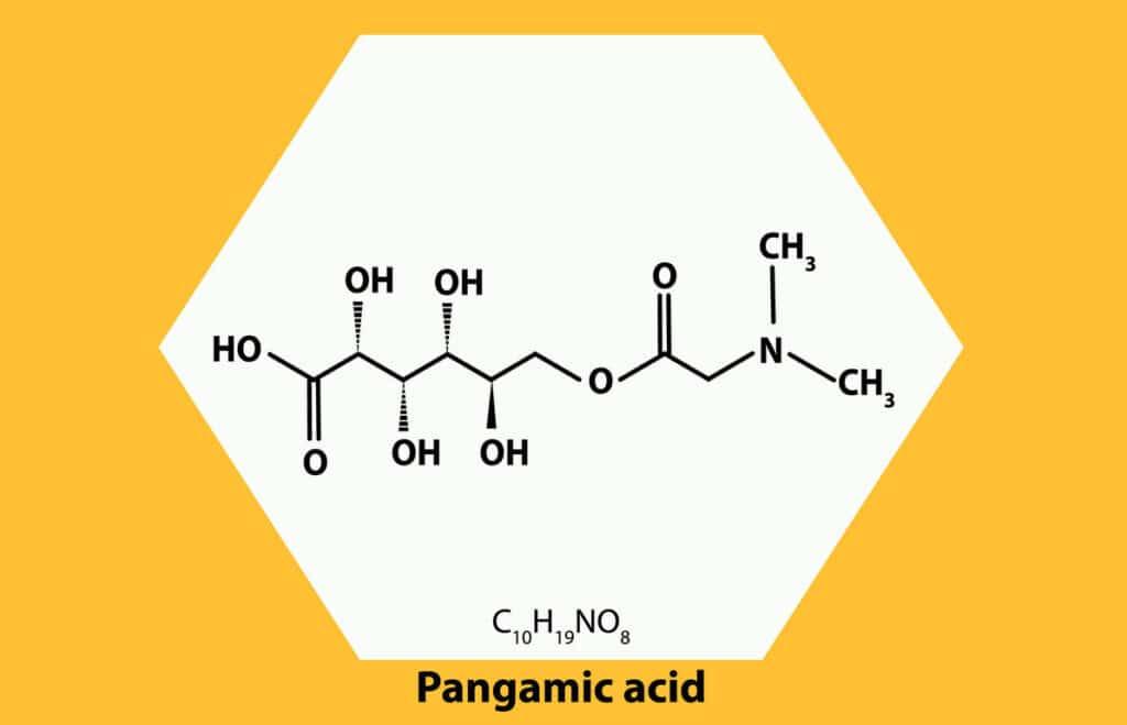 witamina b15 skład