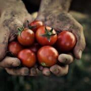 pomidory witaminy