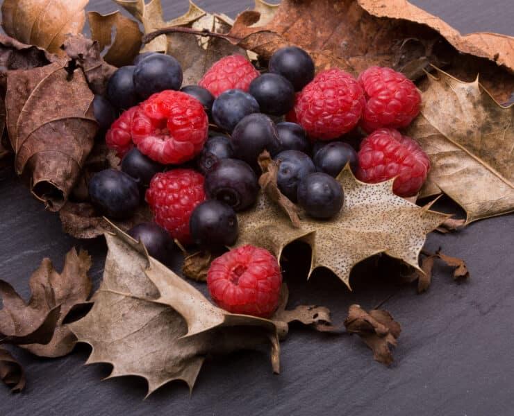 owoce leśne