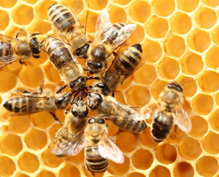 pszczoły produkty pszczele