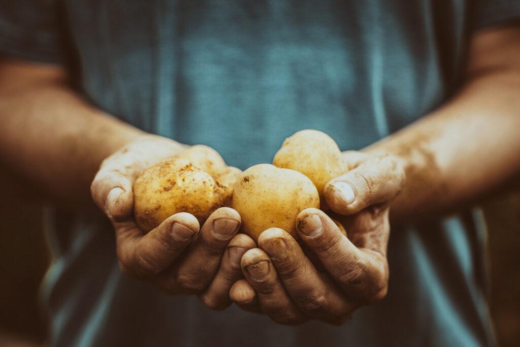 ziemniaki psiankowate