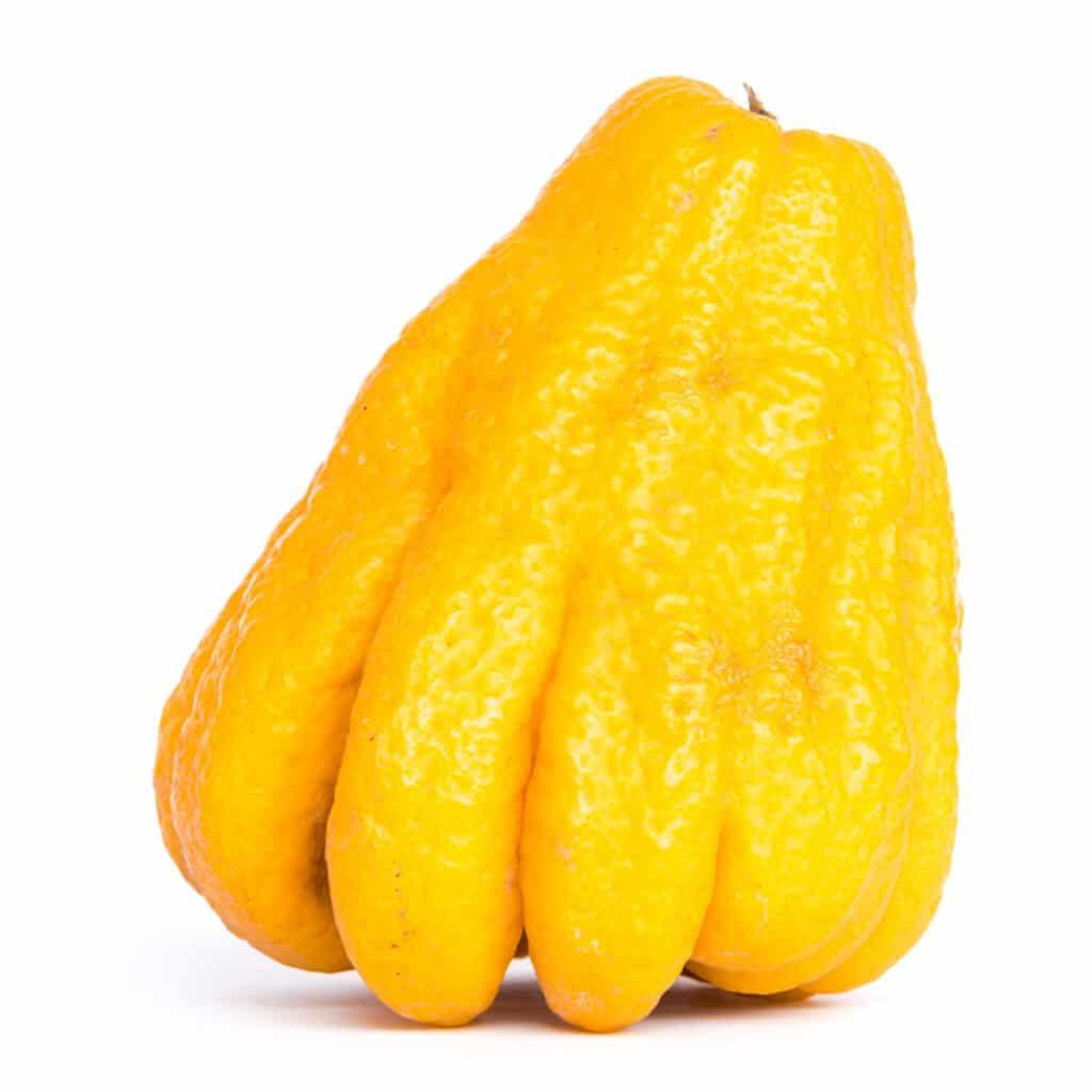 ręka buddy