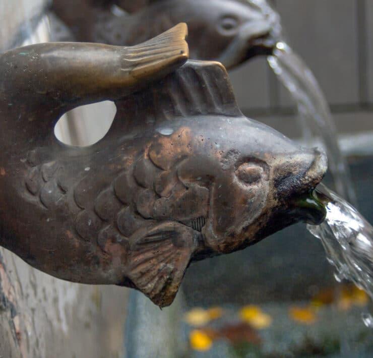 ryba żelazna